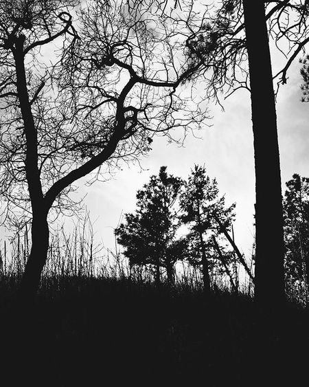 Blackandwhite Blackandwhitephotography Bnw Bnw_globe Bnw_rose Bnw_society Bnw_captures Bnw_capture Bnw_colorado Bnw_life Bnw_world Bnw_worldwide Bnw_planet Trees Silhouette Backlight Nature Travel Coloradosprings Colorado Nikon D3300 Vscophile VSCO Vscocam