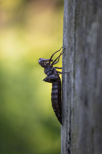 Animal Animal Themes Animal Wildlife Animals In The Wild Beauty In Nature Close-up Day Focus On Foreground Insect Invertebrate Nature No People One Animal Outdoors Plant Selective Focus Tree Tree Trunk Trunk Wood - Material Wooden Post