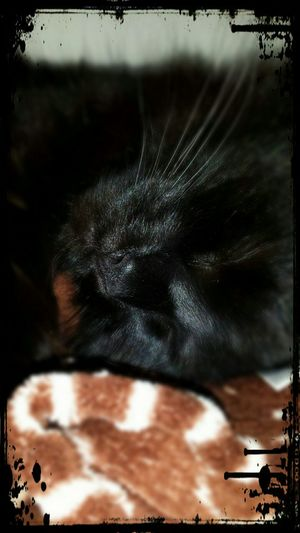 I Love My Cat Master Grimly Pets