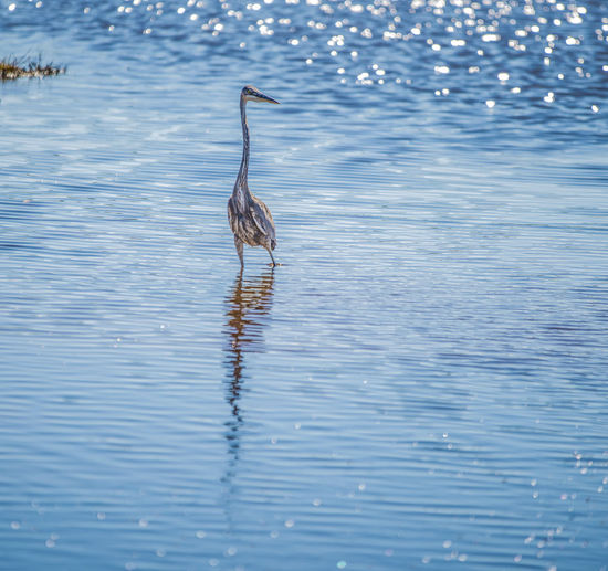 Bird Water Everyglades Animals In The Wild Reflection Beauty In Nature No People One Animal Animal Themes