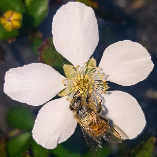 Flower Flower Head Nature Plant Beauty In Nature Close-up Outdoors Day Tadaa Community Bees And Flowers