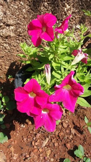 Kerala India MyClick Macro Beauty GodsOwnCountry Goodmorning EyeEm  Good Morning World! Flowers Mygardenflower