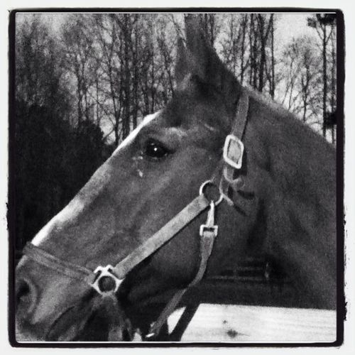 This Is The Horse I Ride Hid Name Is Class