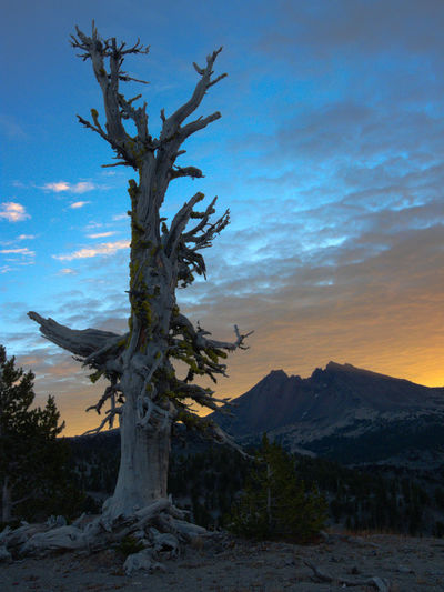 Old tree new morning Hiking Orange Sky Bare Tree Beauty In Nature Branch Cloud - Sky Day Dead Tree Landscape Mountain Nature No People Outdoors Public Land Scenics Sky Sunrise Tranquility Tree Tree Trunk