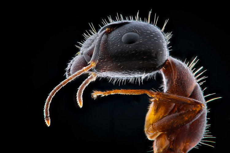 Close-up of insect on black background