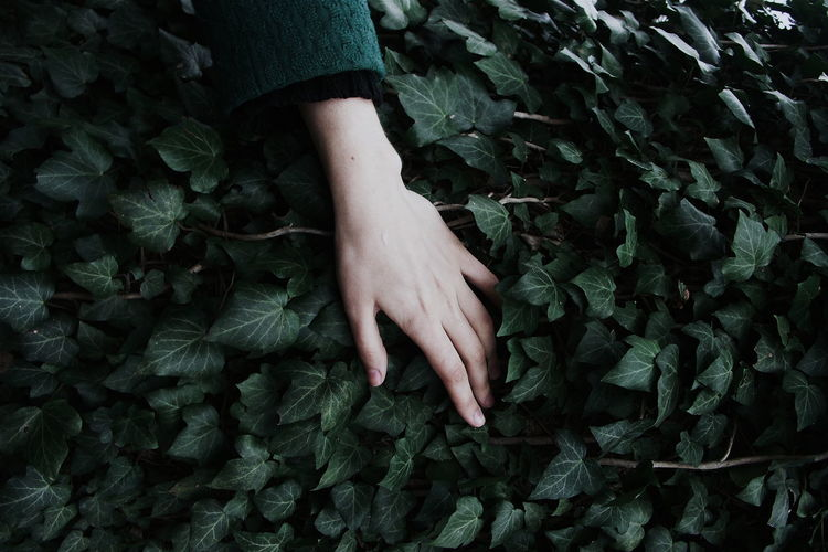 Cropped image of woman touching plants growing outdoors