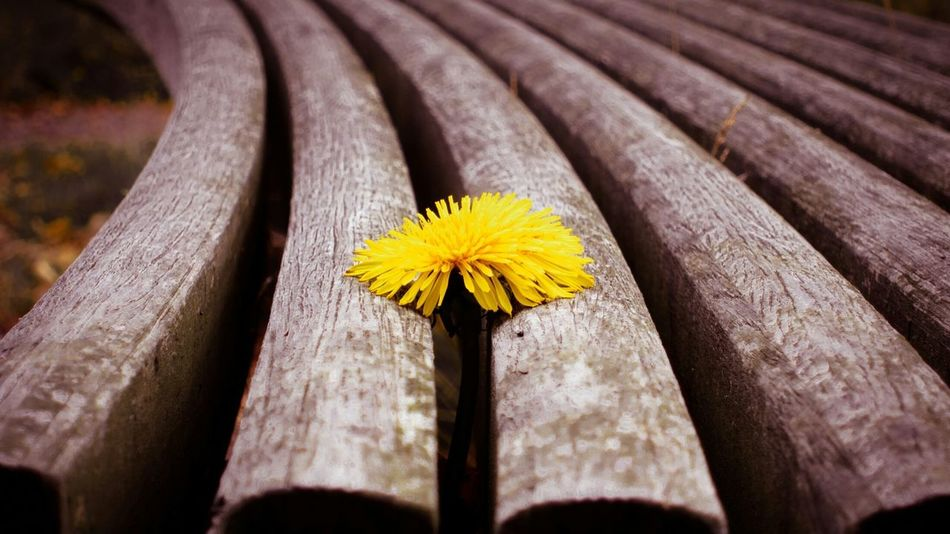 Türkiye Samsun Makro First Eyeem Photo EyeEm Nature Lover EyeEm Best Edits EyeEmNatureLover#flower#Nature_collection Eyeemphoto