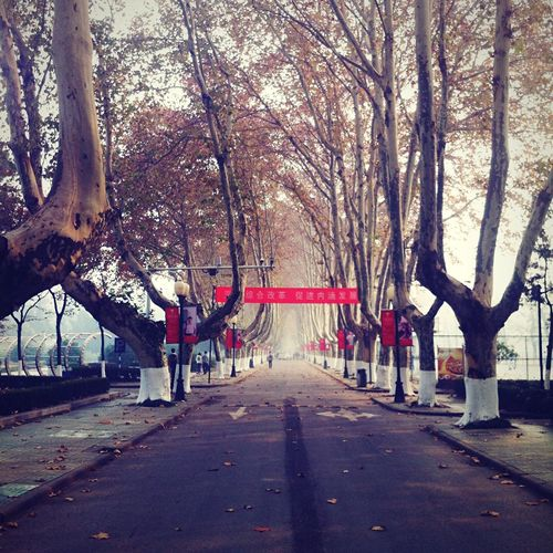 NUAA 南京 江苏 Nanjing University Campus Winter Road Trees School