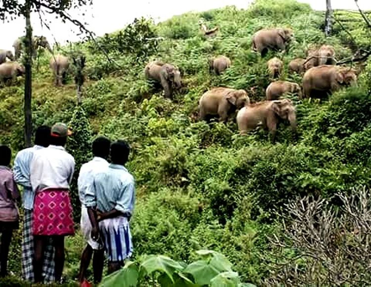 Animals Elephants Elephant Trekking