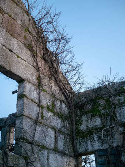 Architecture Sky Low Angle View Built Structure Tree Wall Building Exterior No People Nature Plant Day Clear Sky Wall - Building Feature History The Past Old Stone Wall Blue Solid Building Outdoors Ruined Ancient Civilization Lost Place