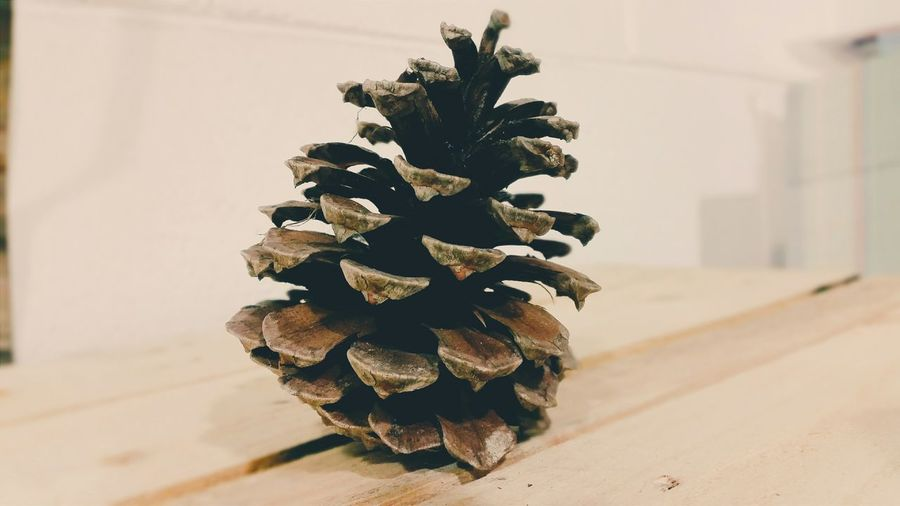 Cone Tree Forest Composition Vscocam Vsco Taking Photos Eye4photography