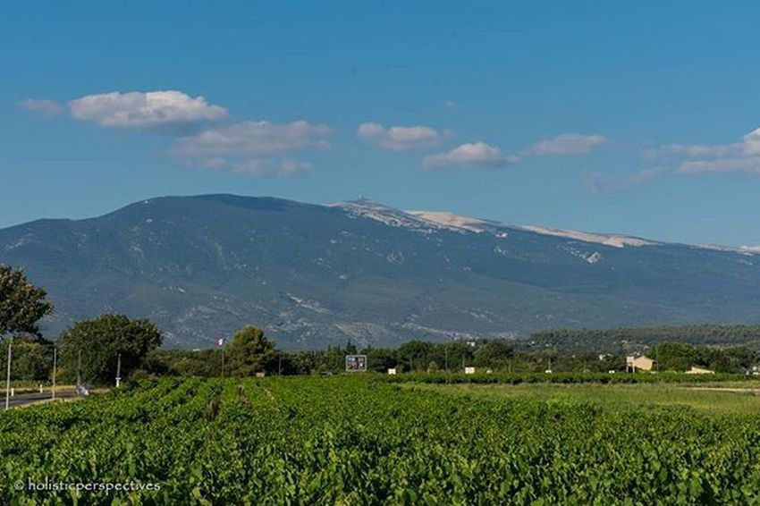 Mountventoux Vineyards  CôtesduRhône Rhône