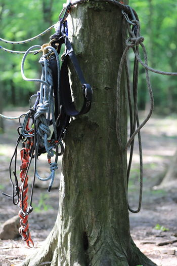Close-up of rope on tree trunk