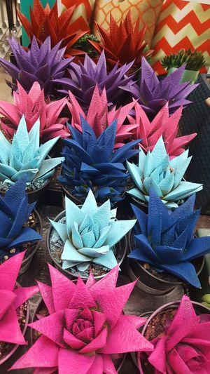 Close-up Plants