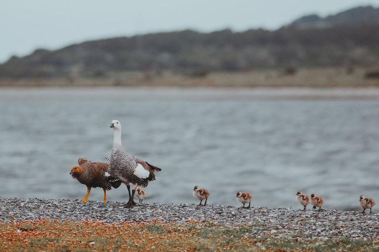 Birds perching on lakeshore
