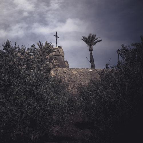 Cruz Murcia