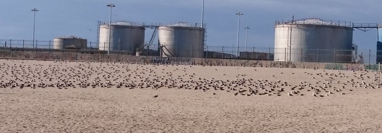 A Lot Of Birds Beach Birds Built Structure Industry No People Silo