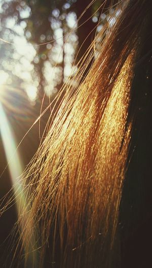 Appearance. Sun Beam Hair In The Woods Girl Mobilephotography