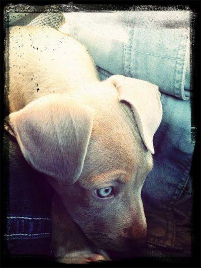 She's a good dog(: