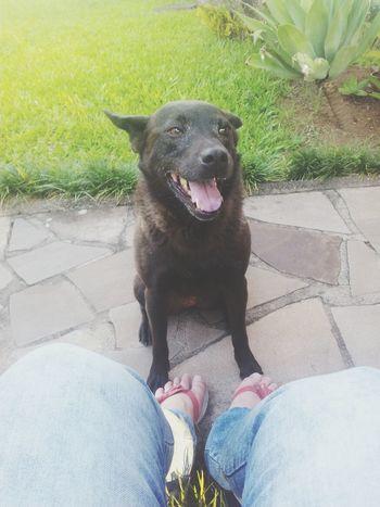 Dog Love My Baby