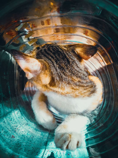 High angle view of cat drinking water