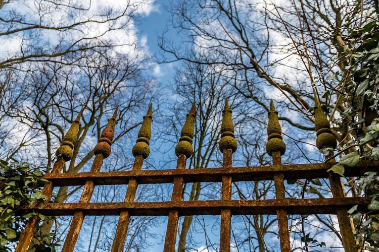 365project Architecture Bare Tree Fences Grille Low Angle View No People Outdoors Rouillée Rusty Sky Tree