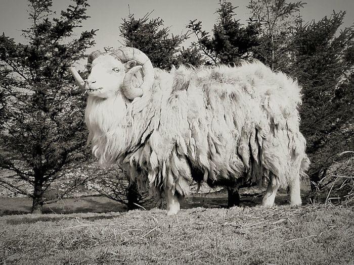 Mobilephotography Animal Themes Nature