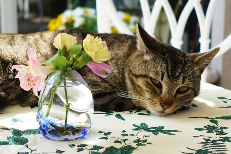 Pets Domestic Cat Domestic Animals Indoors  No People Animal Themes Close-up With Flowers A Cat Relaxing On A Table Pet Portraits