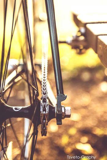Portrait Bicycle Thegreenhornet BLB Track Cycling Fixedgear