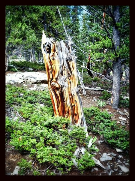 Neat dead tree I saw on my hike today...