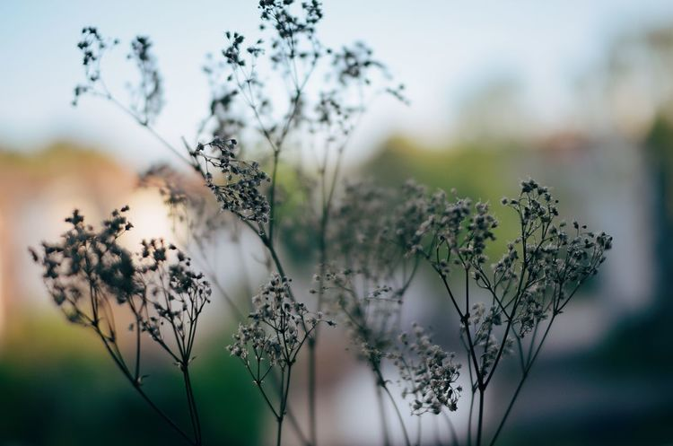 Beauty In Nature Bokeh Photography Day Dead Plant Dry Plant Dry Plant On Leak Freshness Growth Indie Indie Nature Natural Nature Nature On Your Doorstep Nature Photography No People Outdoors Peace Plant Plant Plant Life Silhouette Spirituality Vintage Vintage Nature Yoga
