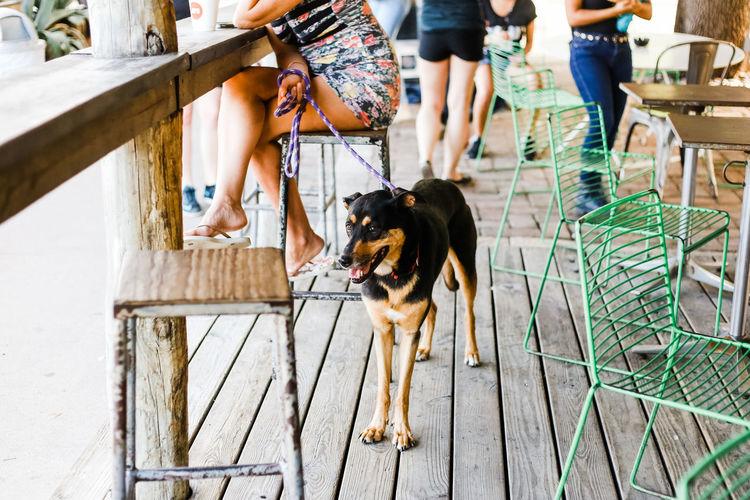 A leashed dog