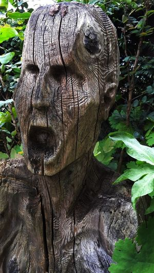 Close-up of statue on tree trunk