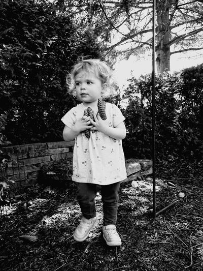 Girl holding pine cones while standing in yard