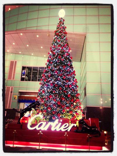 到處充滿聖誕氣息,祝福的季節又來了☻