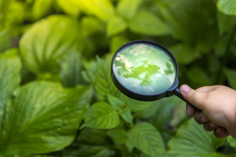 Cropped image of hand holding magnifying glass