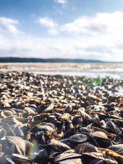 Surface level of pebble beach against sky
