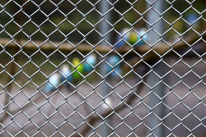 Budgies in aviary. Abstract Animal Themes Animals Aviary Birds Bokeh Branches Budgies Chainlink Fence Close-up Eye4photography  EyeEm Best Shots EyeEm Gallery Fence Hello World Imprisoned Limitations Locked Metal Metall Minimalism No People Pattern Protection Still Life