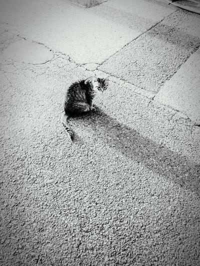 Cat Stray Cat Happyday