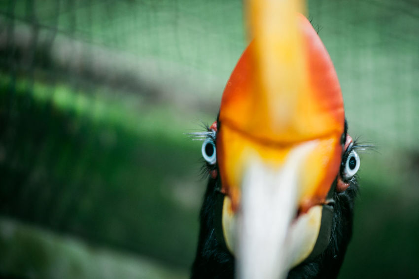 Animal Themes Animals In The Wild Bird Bokeh Branch Close-up Depth Of Field Focus On Foreground Hornbill Imagination Leaf Nature New Life No People One Animal Perching Portrait Q Selective Focus Wildlife Zoology EyeEm X Audi - Letter Q