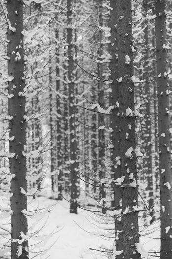 Full frame shot of tree trunk during winter