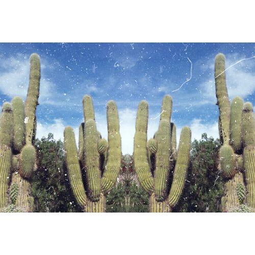 Cactus plants against blue sky