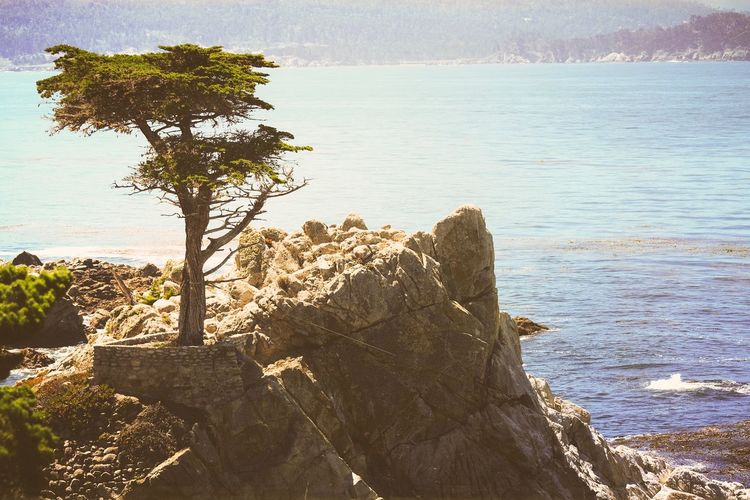 Lone cypress tree in Monterey Beauty In Nature Coast Coastline Cypress Trees  Day Horizon Over Water Lone Cypress Monterey Nature No People Outdoors Pacific Pacific Northwest  Pacific Ocean Rock Scenics Sea Sky Sunlight Tranquility Tree Water