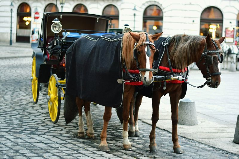 Horse Street Domestic Animals Working Animal Mode Of Transport Horse Cart City Day Horsedrawn