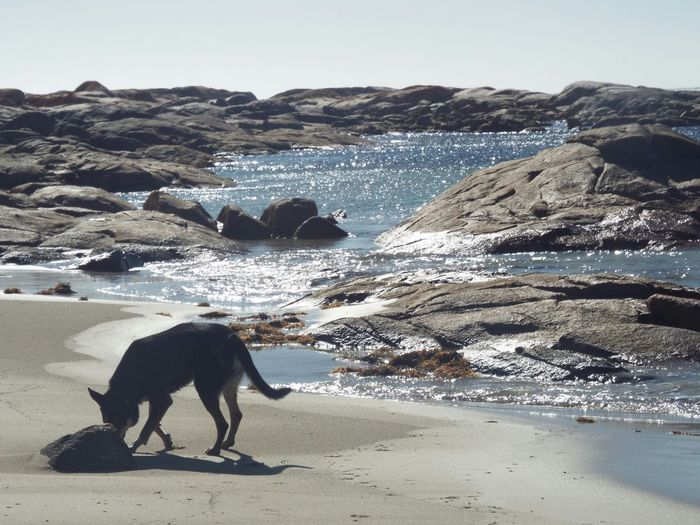 Serenity Sparkles Relaxing Coldwater Sand & Sea Seashore Country Life Summer ☀ Australia Australiankelpie Enjoying Life Walking