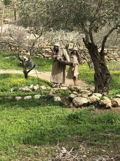 Olive Grove Stroll Bible Time Children Working EyeEmNewHere Nazareth Olive Tree Day Grass Growth Leisure Activity Nature Outdoors People Real People Tree