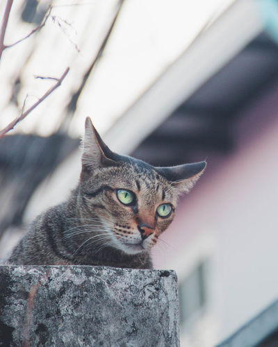 The cat has no