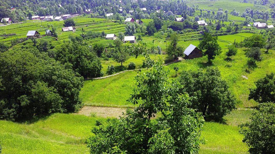 Kangan Wangat Kangan Kashmir Wangat Kashmir Kashmir Rural Scenes Rural Landscape Village Life Village GREEN LIFE