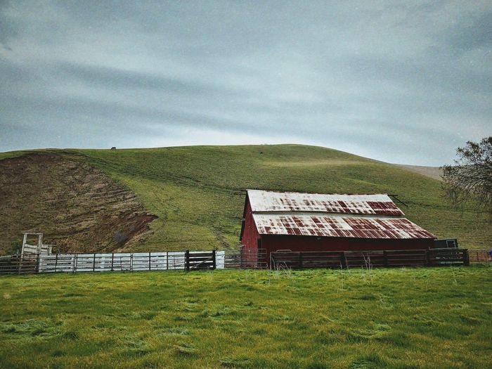 """Vanishing Icon"" A red barn, once common in ranching and farming communities in Northern California, but now a vanishing icon, sits on a still working cattle ranch in Contra Costa County, California. Iconic Ranching Old Barn Red Barn Barn Field Sky Nature Green Color Cloud - Sky Landscape Farm Rural Scene"