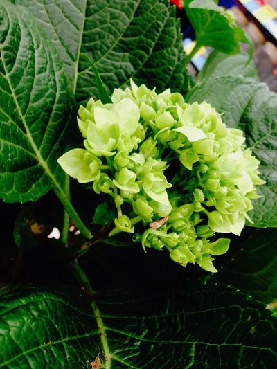 Plant Nature Growth Green Color Beauty In Nature Flower Fragility Leaf Day Freshness No People Flower Head
